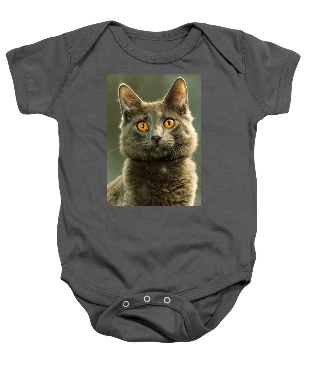 Domestic House Cat Baby Onesie featuring the photograph Amber-eyed Domestic House Cat by Larry Allan