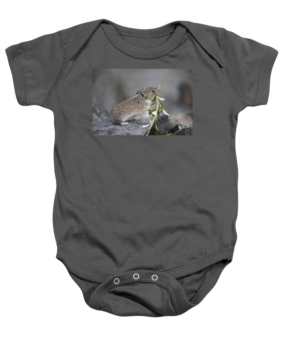 Mp Baby Onesie featuring the photograph American Pika by Michael Quinton