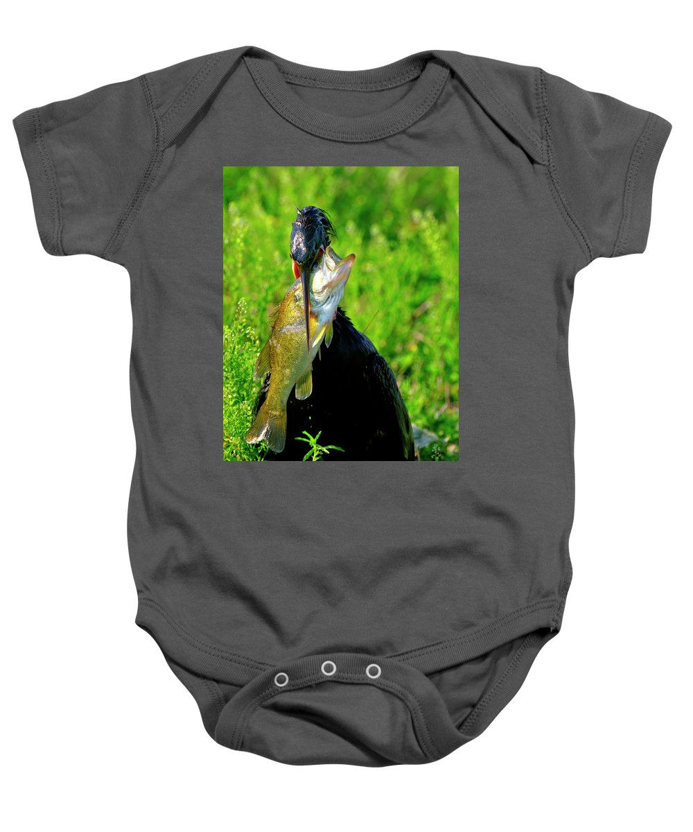 Anhinga Baby Onesie featuring the photograph Anhinga And The Fish by Bill Dodsworth