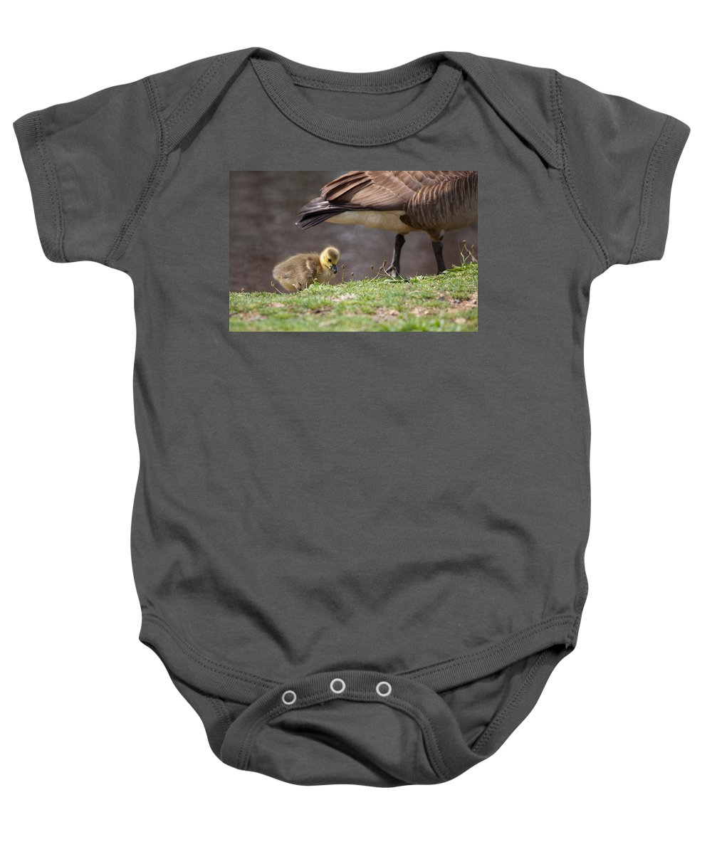 Geese Baby Onesie featuring the photograph Baby Back by Karol Livote