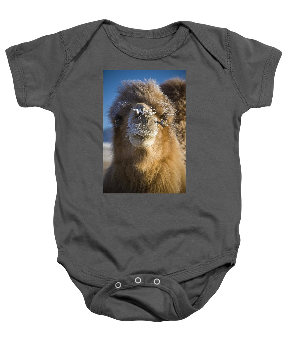 Animals Baby Onesie featuring the photograph Bactrian Camel Camelus Bactrianus by David DuChemin