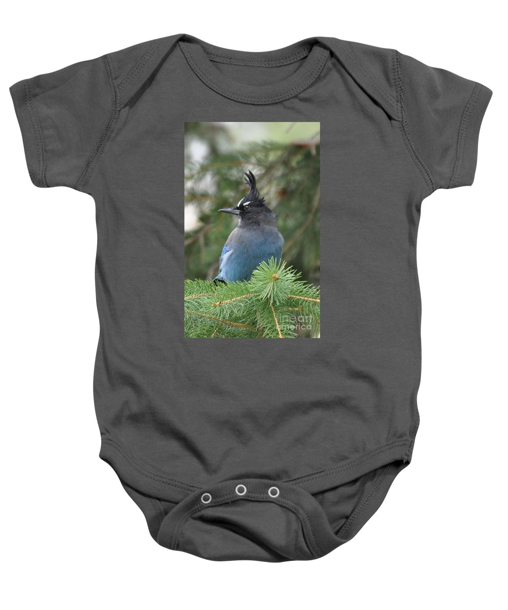 Birds Baby Onesie featuring the photograph Bad Hair Day by Dorrene BrownButterfield