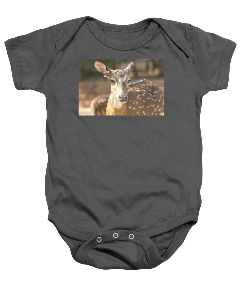 Deer Baby Onesie featuring the photograph Bad Haircut Day by Douglas Barnard
