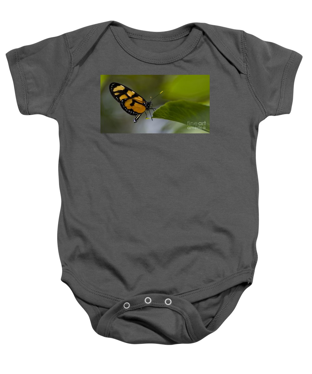 Butterfly Baby Onesie featuring the photograph Balancing Act by Heather Applegate