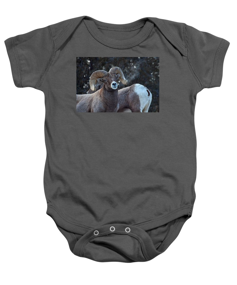 Bighorn Sheep Baby Onesie featuring the photograph Battle Weary by Jim Garrison