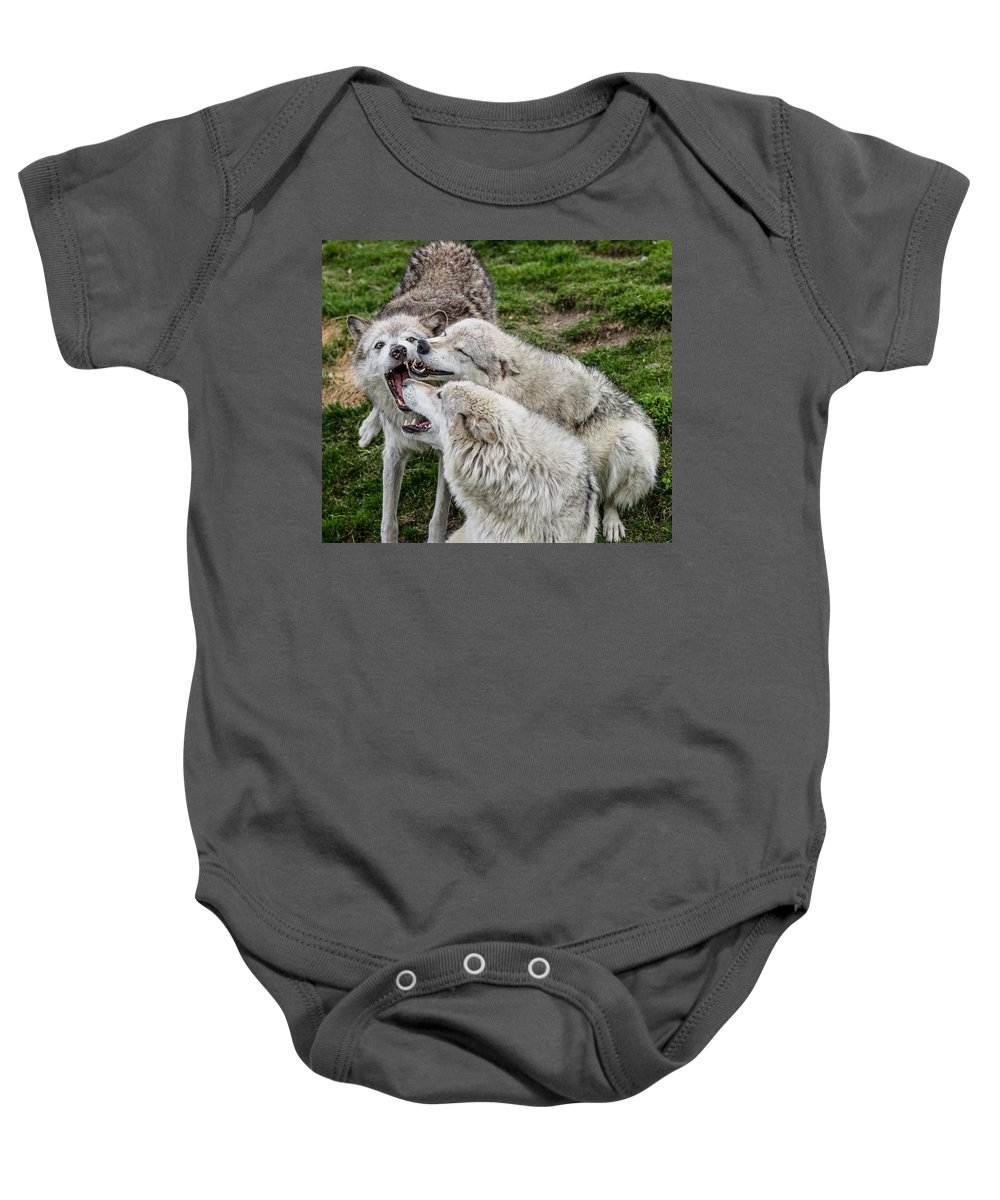 Wolf Pack Baby Onesie featuring the photograph Biting Festival by Greg Nyquist