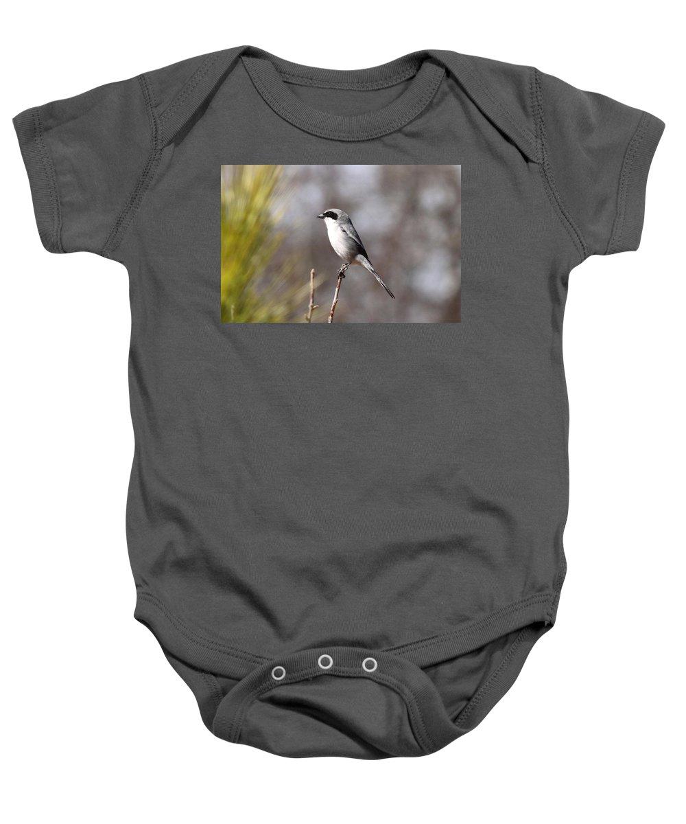 Loggerhead Shrike Baby Onesie featuring the photograph Black Mask by Travis Truelove
