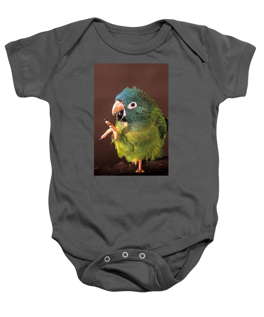 Blue Crown Conure Baby Onesie featuring the photograph Blue Crown Conure Speaks by Larry Allan