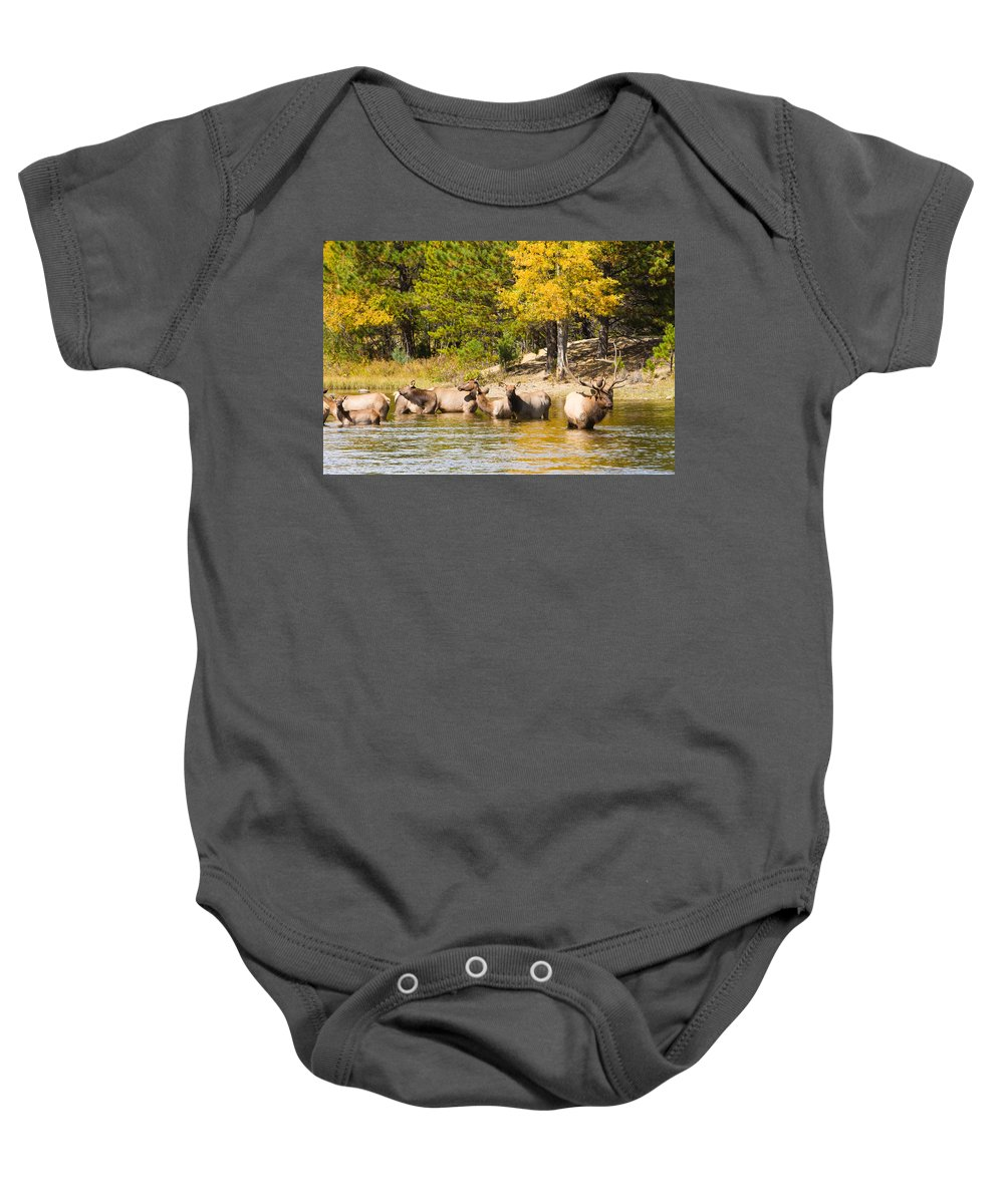 'estes Park' Baby Onesie featuring the photograph Bull Elk Watching Over Herd 5 by James BO Insogna