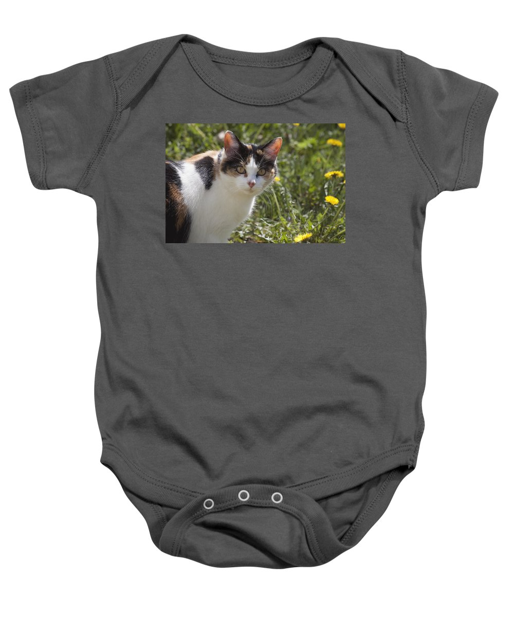 Cat Calico calico Cat Feline Eyes Pet Animal Stare Baby Onesie featuring the photograph Calico by Eunice Gibb