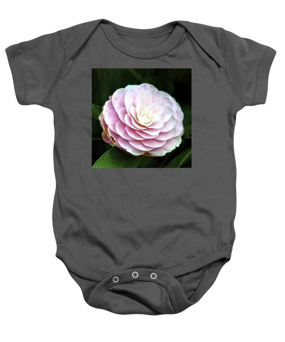 Camellia Baby Onesie featuring the photograph Camellia Twenty-two by Ken Frischkorn