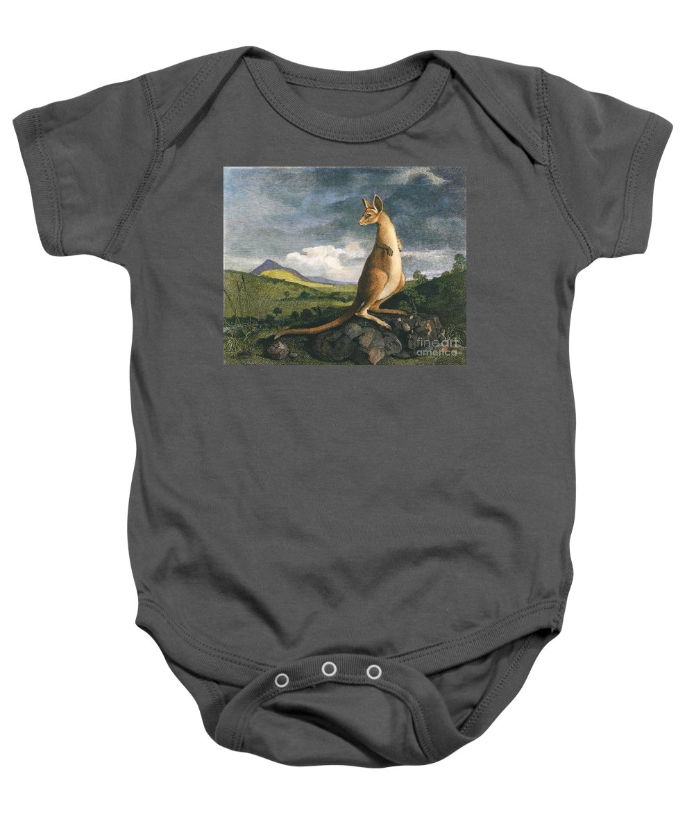 1773 Baby Onesie featuring the photograph Captain Cook: Kangaroo, 1773 by Granger