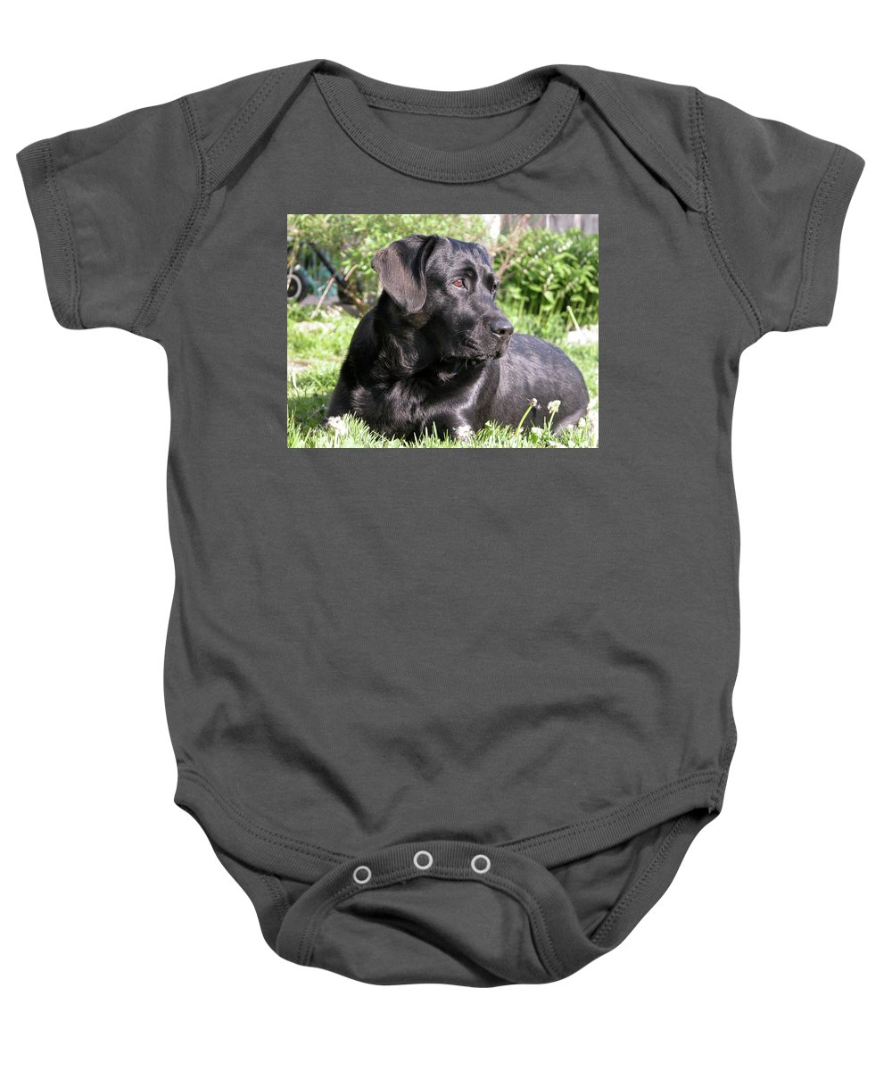 Dog Baby Onesie featuring the photograph Chicago 0085 by Guy Whiteley