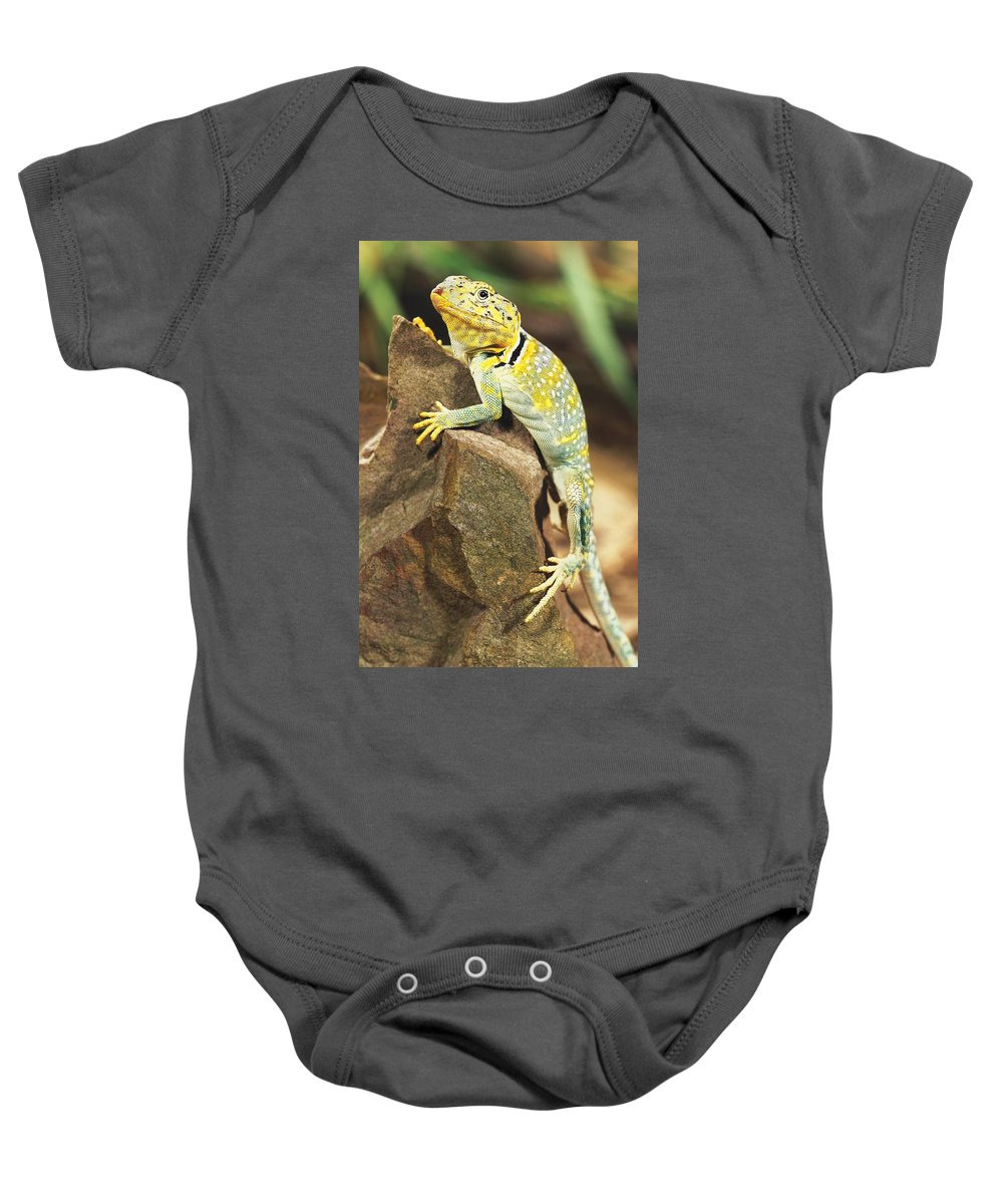 Animal Baby Onesie featuring the photograph Collared Lizard by John Pitcher