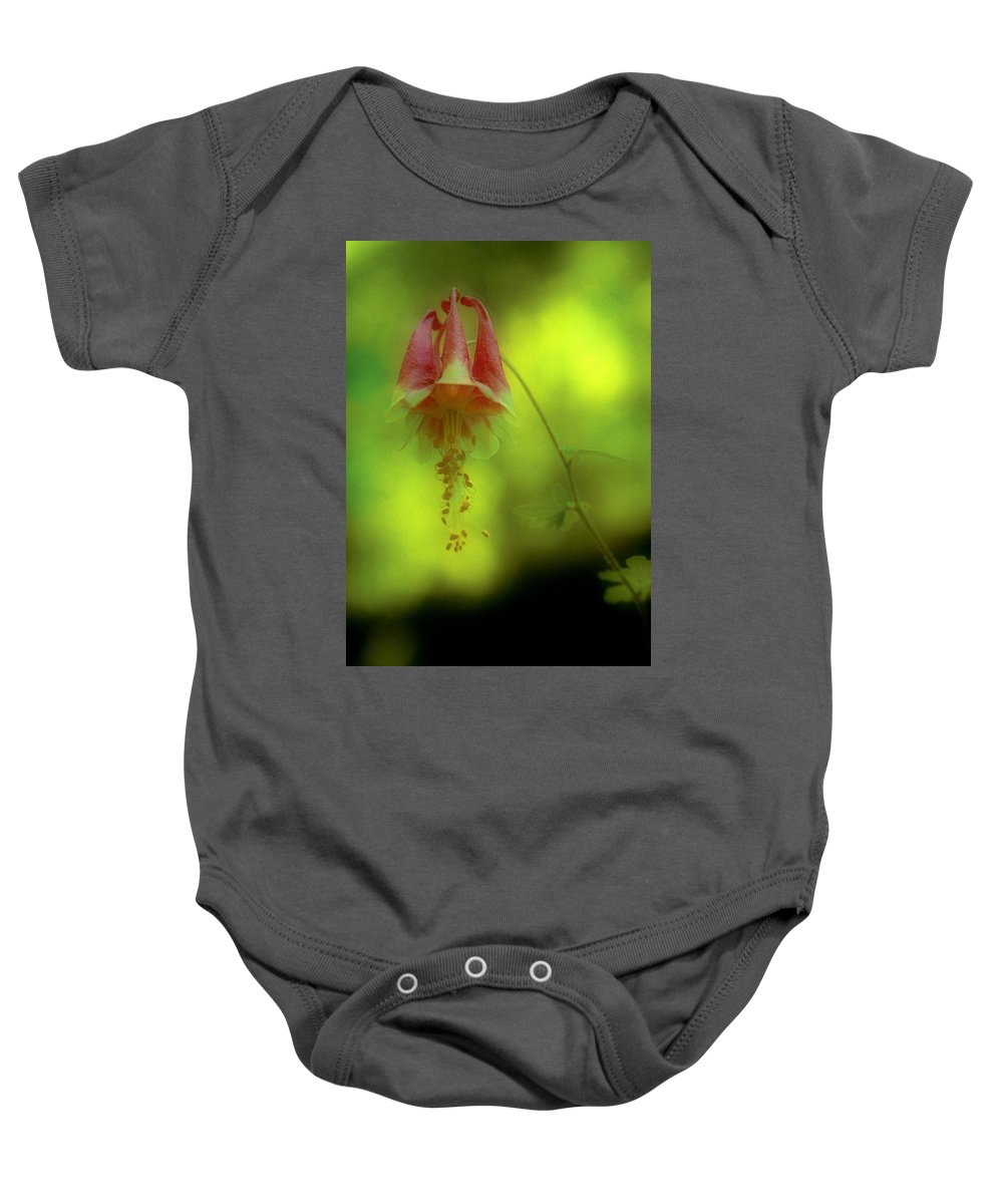 Wildflowers Baby Onesie featuring the photograph Columbine by Garry McMichael