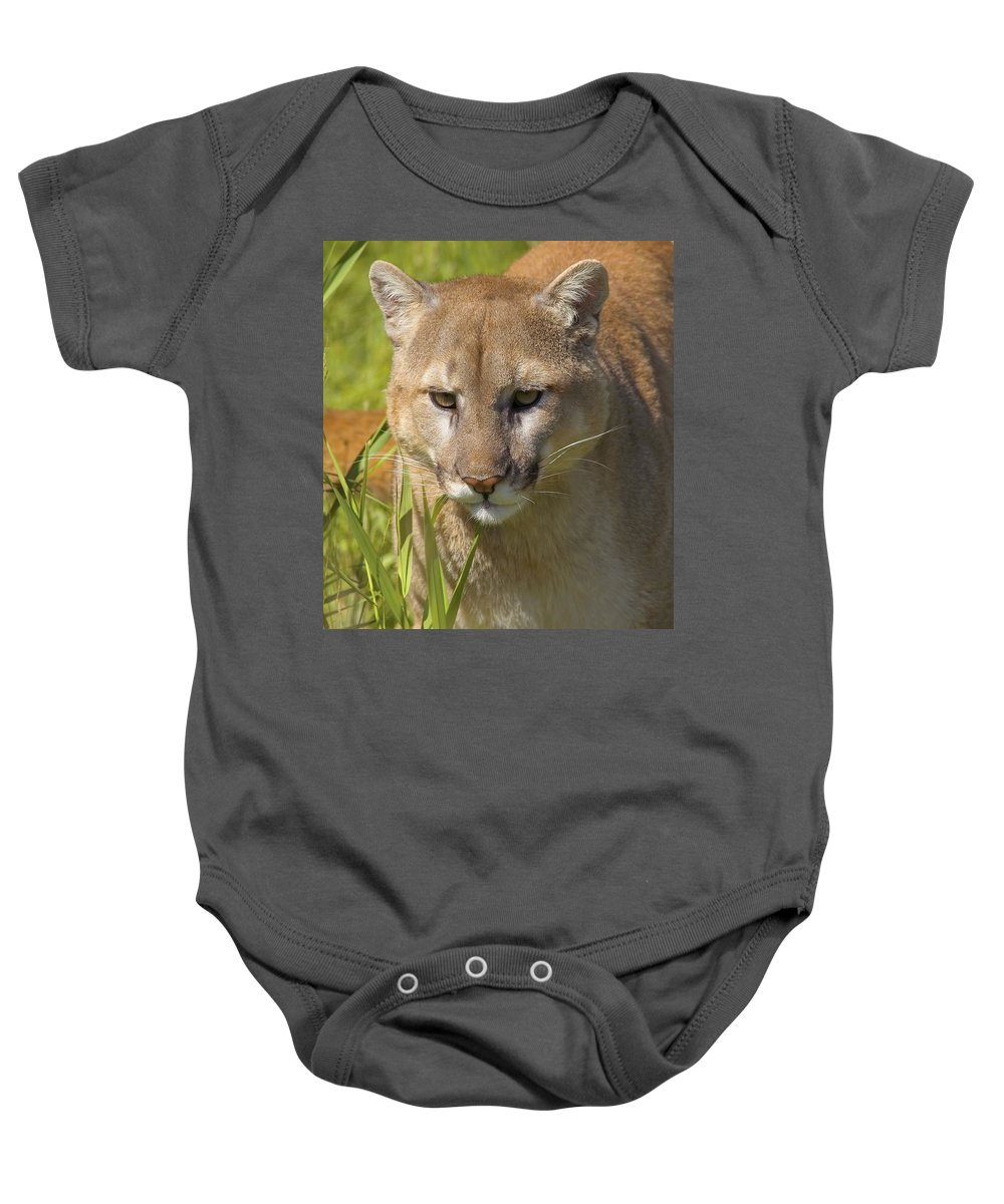 Animal Baby Onesie featuring the photograph Cougar by John Pitcher