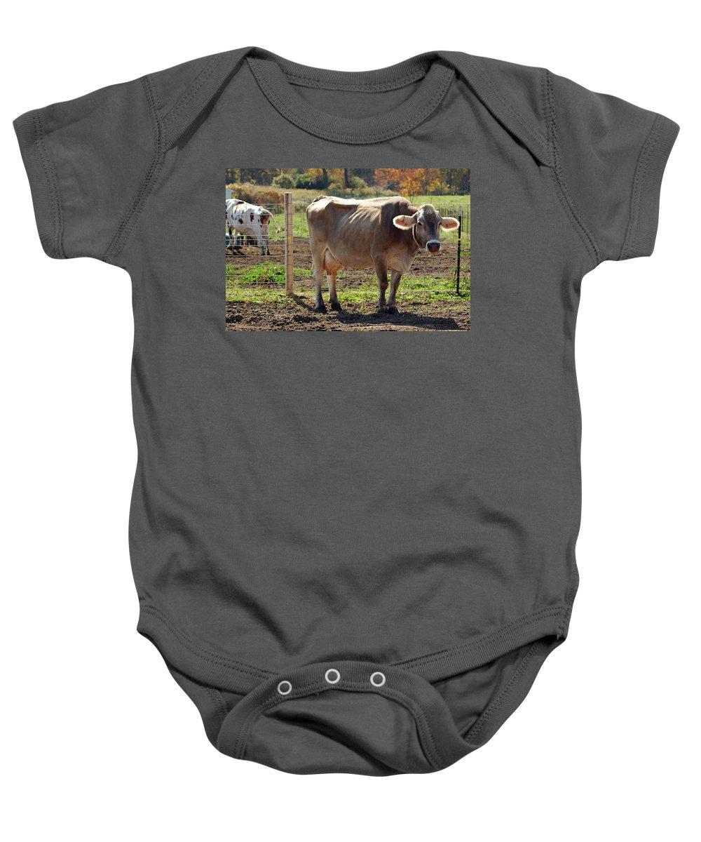 United_states Baby Onesie featuring the photograph Cow Shadows by LeeAnn McLaneGoetz McLaneGoetzStudioLLCcom