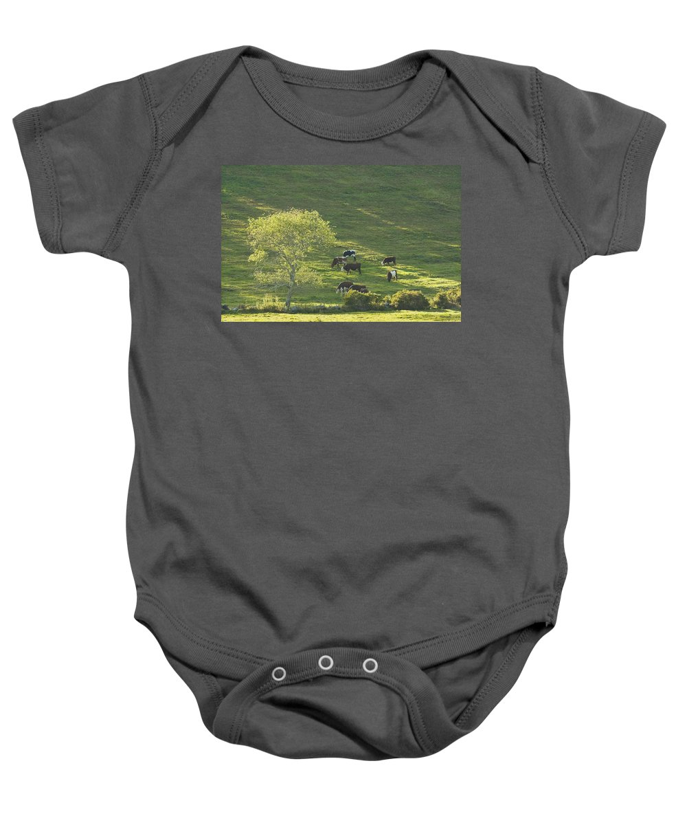 Cow Baby Onesie featuring the photograph Cows On Hillside Summer In Maine by Keith Webber Jr