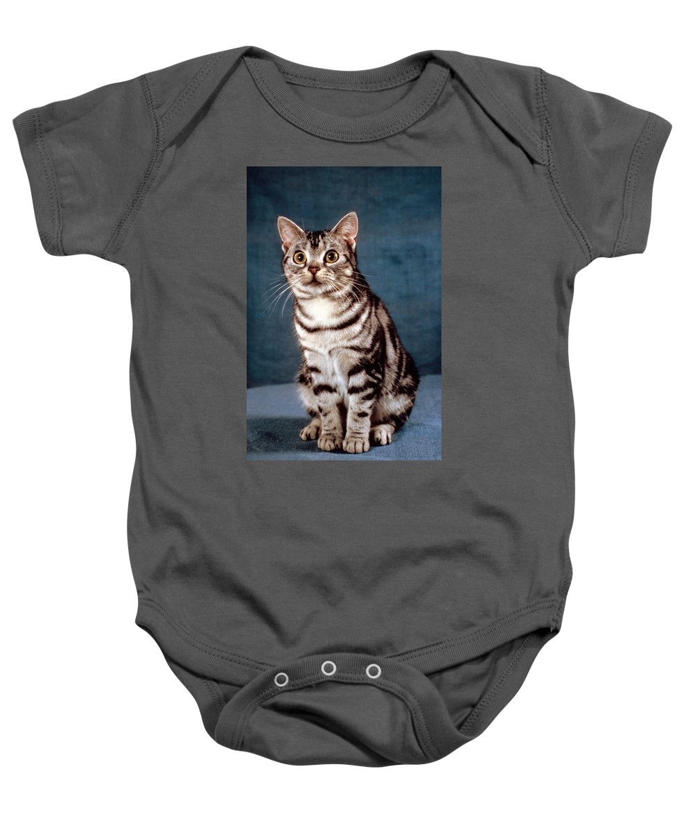 American Shorthair Cat Baby Onesie featuring the photograph Curious American Shorthair by Larry Allan