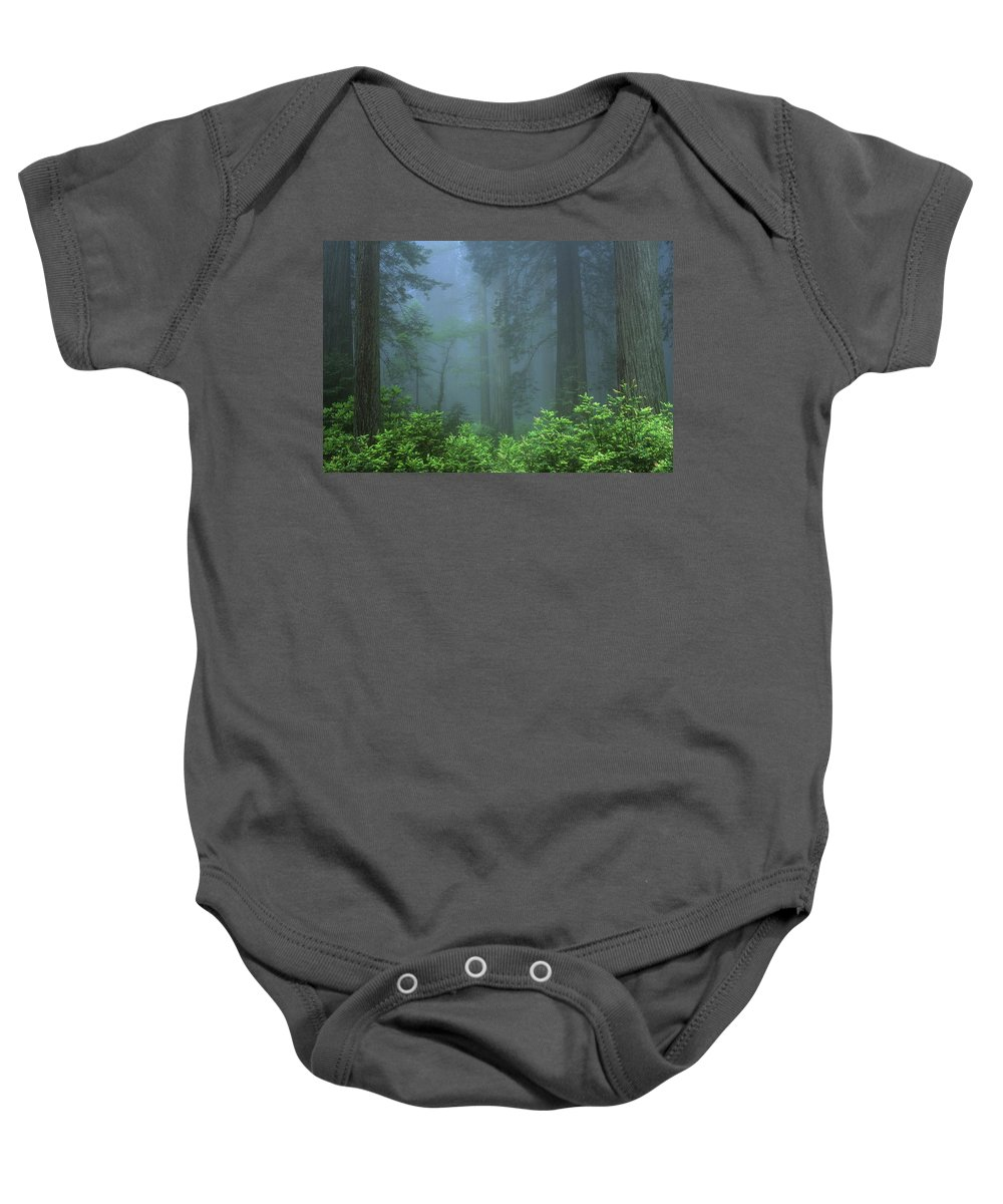 California Baby Onesie featuring the photograph Early Morning In The Forest, Humboldt by Bilderbuch