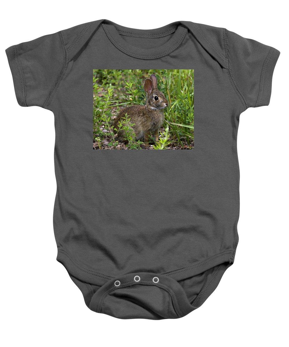 Summer Baby Onesie featuring the photograph Eastern Cottontail Rabbit Dmam005 by Gerry Gantt
