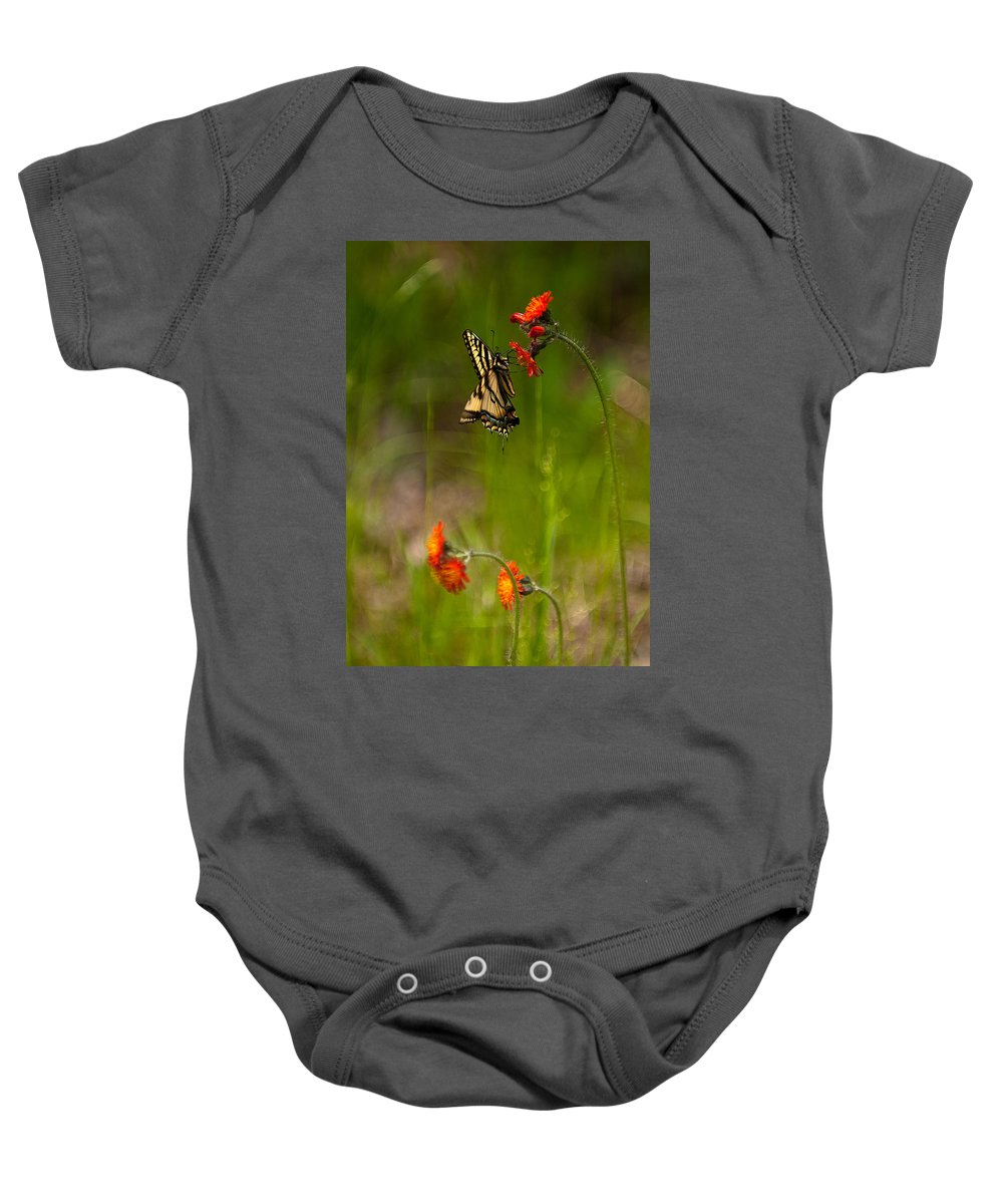 eastern Tiger Swallowtail Baby Onesie featuring the photograph Eastern Tiger Swallowtail Profile Shot by Paul Mangold