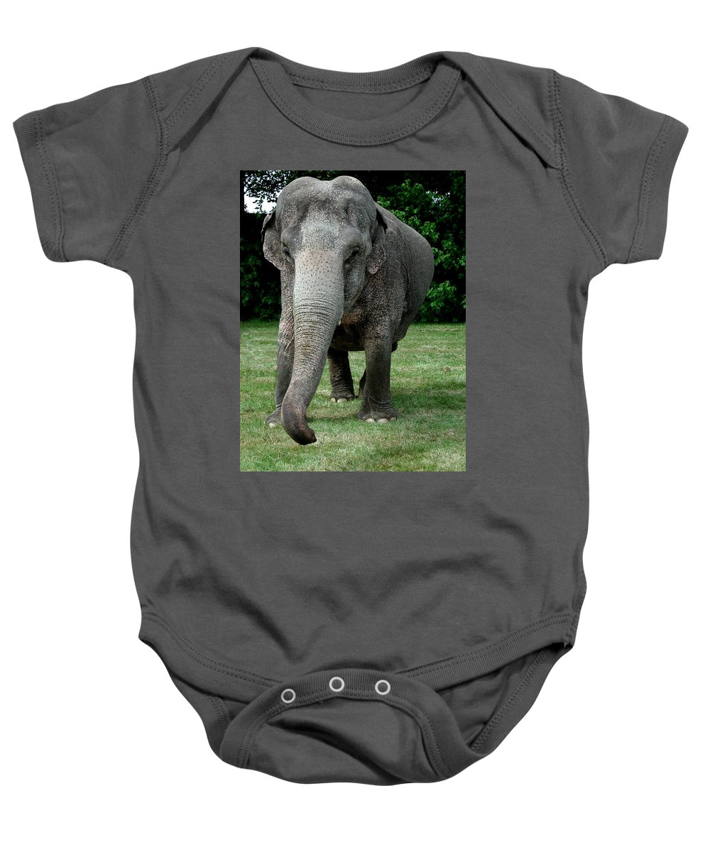 Colette Baby Onesie featuring the photograph Elephant Greet by Colette V Hera Guggenheim