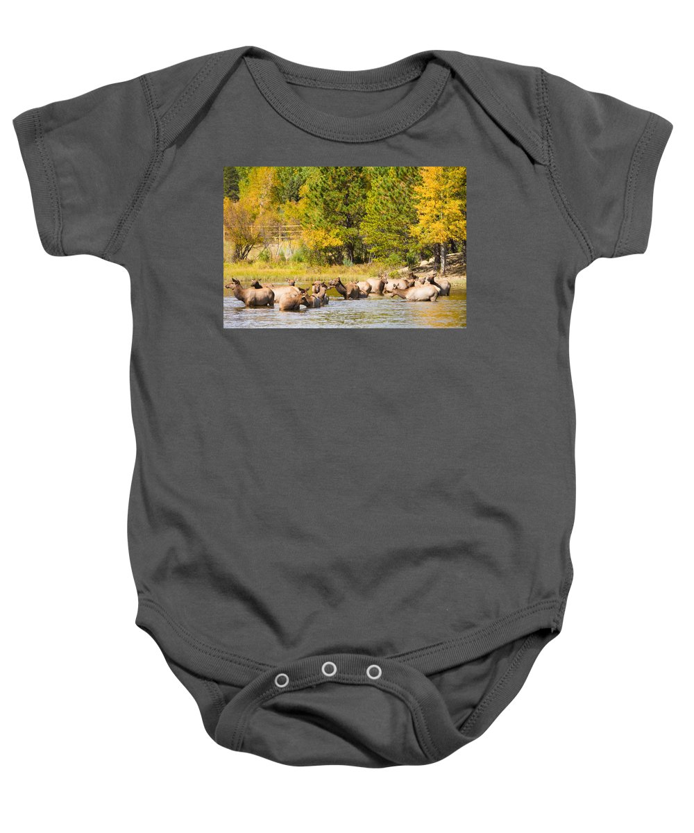 'estes Park' Baby Onesie featuring the photograph Elk Herd With Autumn Colors by James BO Insogna