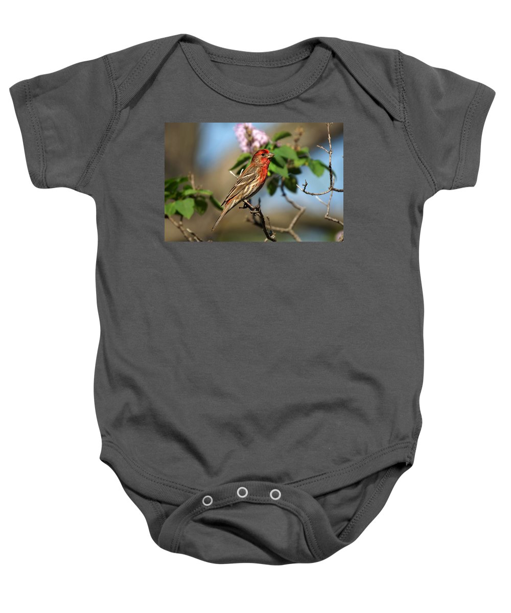 Bird Baby Onesie featuring the photograph Finch In Lilac Bush by Alan Hutchins