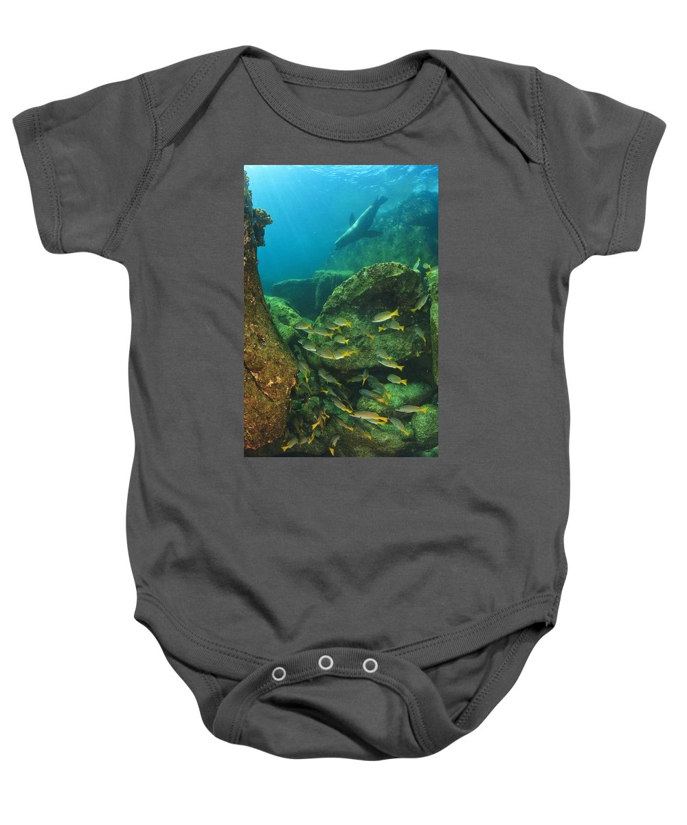 Baha California Sur Baby Onesie featuring the photograph Fish And A Sea Lion In The Water At Los by Stuart Westmorland