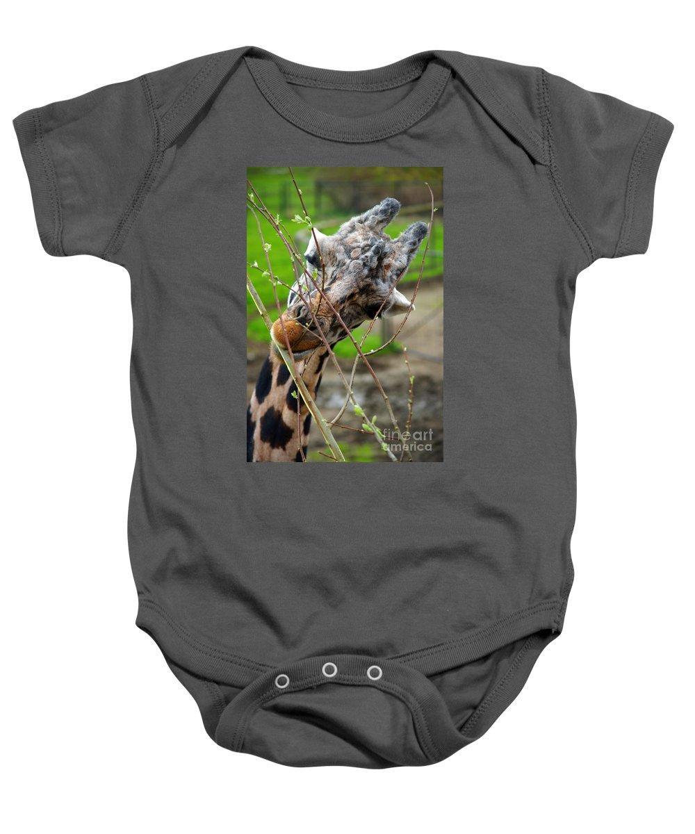 Giraffes Baby Onesie featuring the photograph Giraffe Eating by Randy Harris