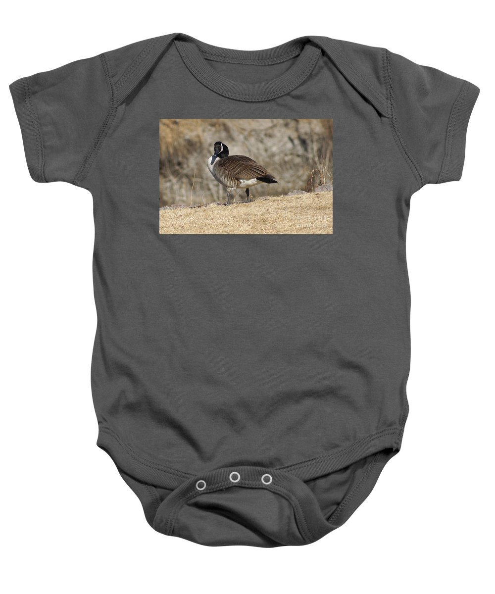 Goose Baby Onesie featuring the photograph Goose With Head Cocked by Lori Tordsen