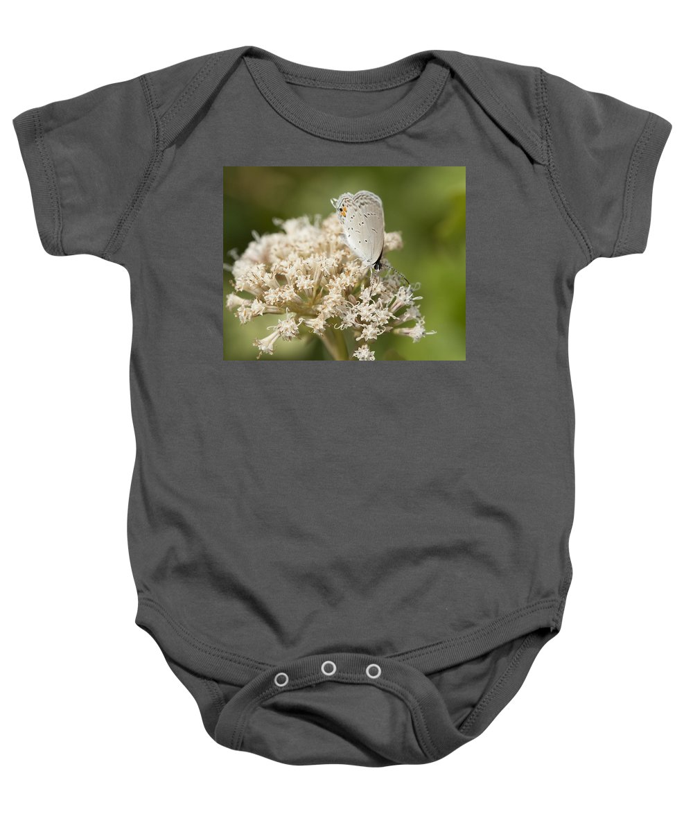 Grey Baby Onesie featuring the photograph Gray Hairstreak Butterfly On Milkweed Wildflowers by Kathy Clark
