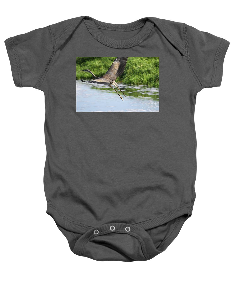 Great Blue Heron Baby Onesie featuring the photograph Great Blue Heron Escape by Sharon Talson