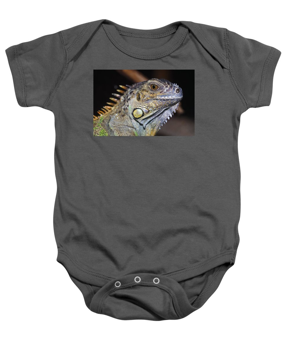 Outdoors Baby Onesie featuring the photograph Green Iguana by Natural Selection Ralph Curtin