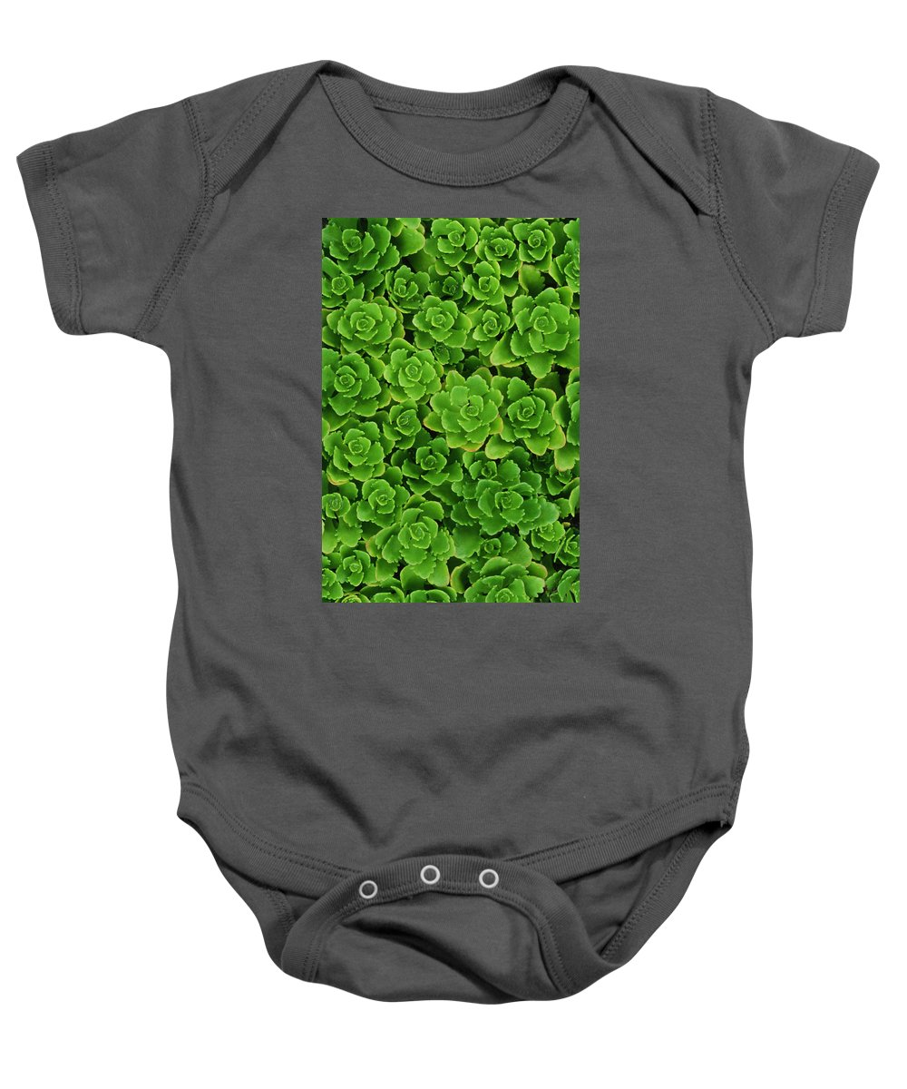 Close Shots Baby Onesie featuring the photograph Hens And Chicks Plants Sempervivum by Mike Grandmailson