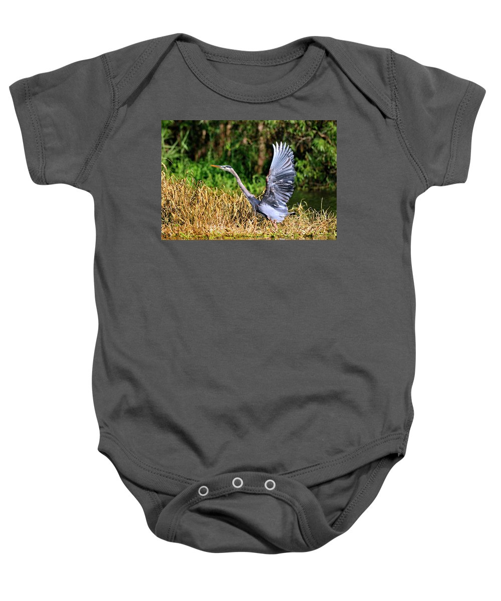 Great Blue Heron Baby Onesie featuring the photograph Heron Taking To Flight by Bill Dodsworth