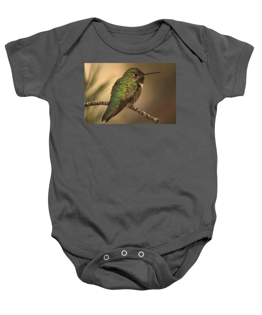 Animal Baby Onesie featuring the photograph Humming Bird On Branch by Raven Regan