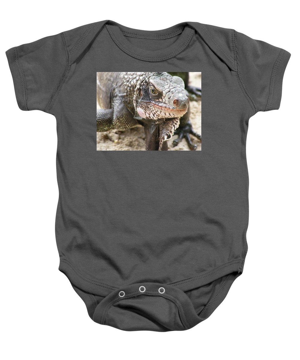 Mango Baby Onesie featuring the photograph Iguana At Magens Bay by Salvadore Delvisco