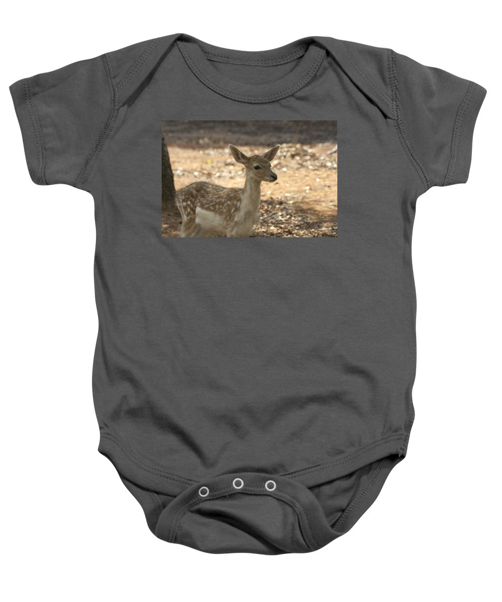 Juvenile Deer Baby Onesie featuring the photograph Juvenile Deer by Douglas Barnard