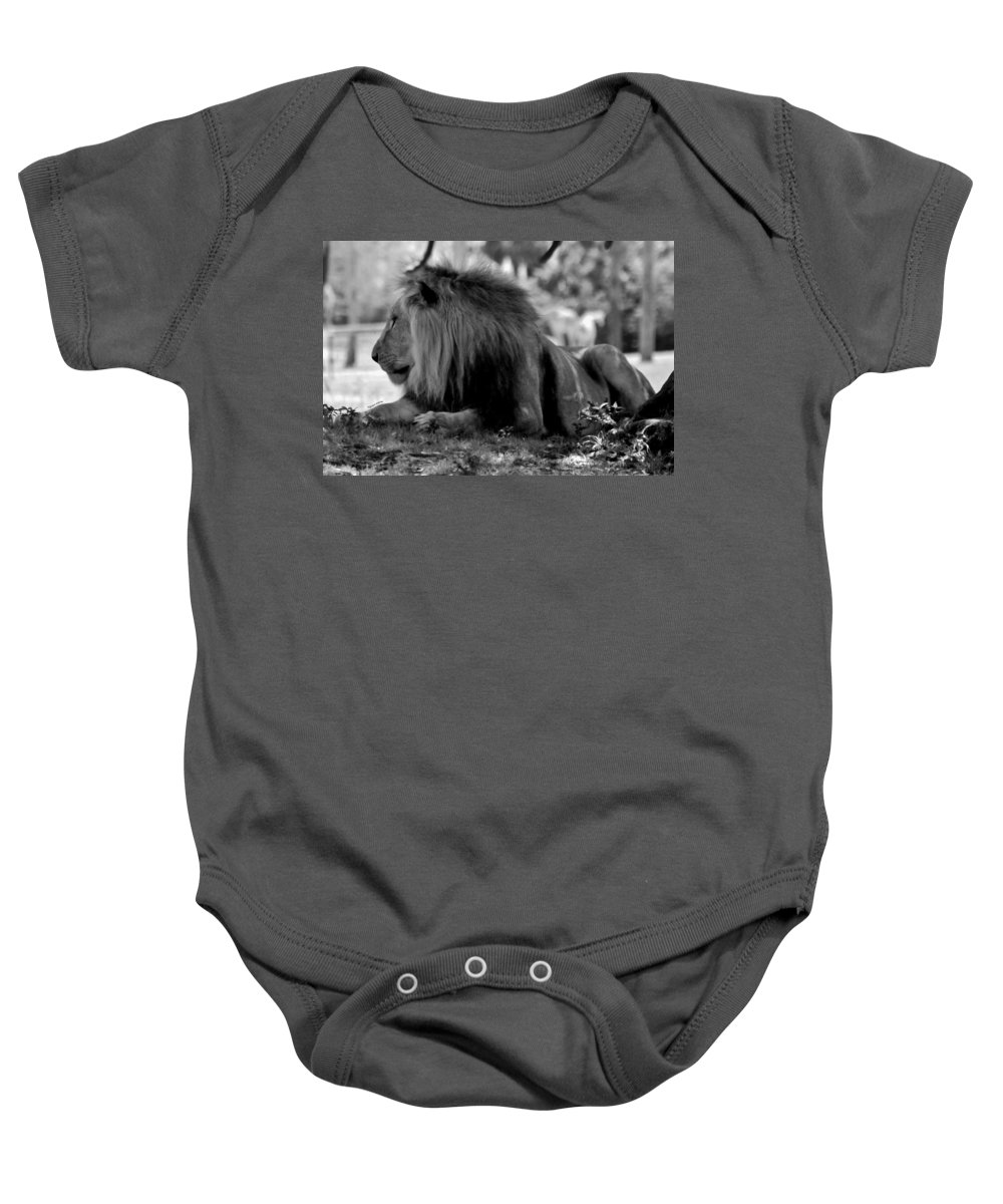 Lion Baby Onesie featuring the photograph King Of Cats by DigiArt Diaries by Vicky B Fuller