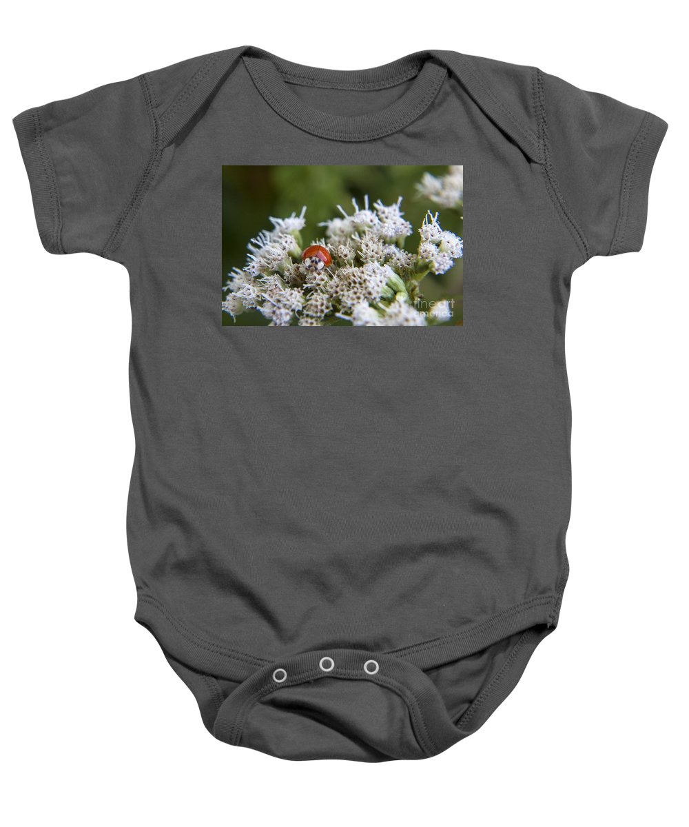 Ladybug Baby Onesie featuring the photograph Ladybug Atop The Flowers by Darleen Stry