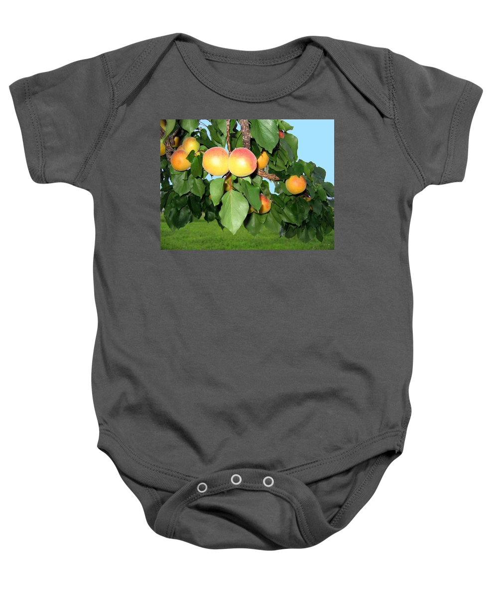 Apricots Baby Onesie featuring the photograph Lake Country Apricots by Will Borden