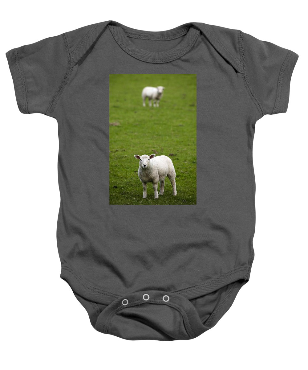 Animal Baby Onesie featuring the photograph Lambs In A Field by Chris Upton