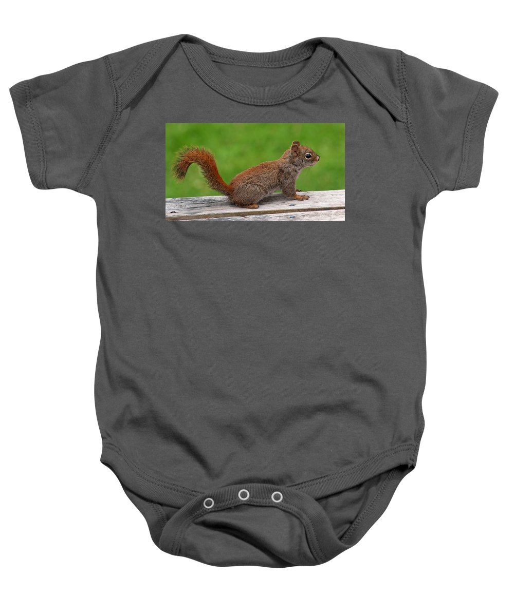Squirrel Baby Onesie featuring the photograph Little Red by Jeff Galbraith