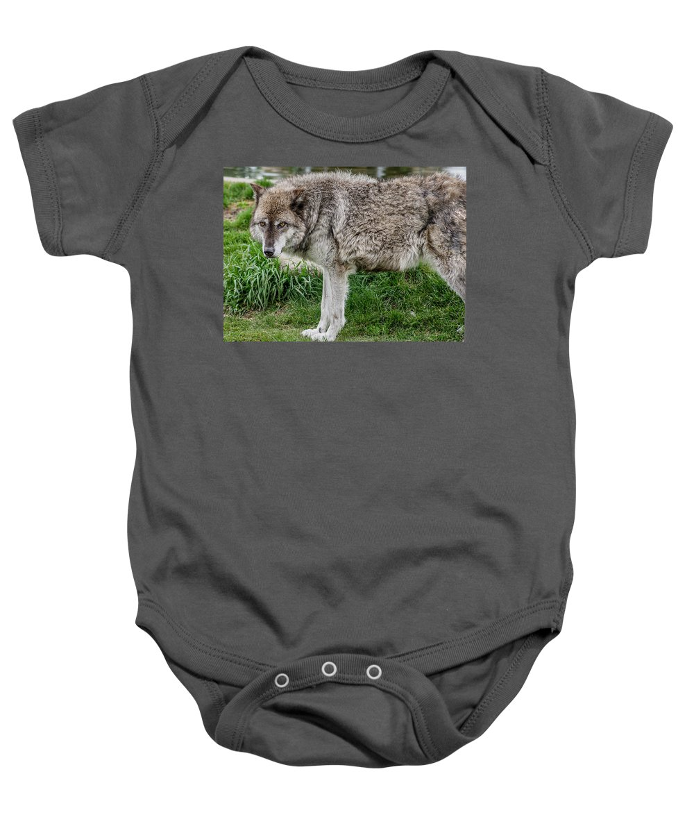 Wolf Baby Onesie featuring the photograph Little Red Riding Hood's Murderer by Greg Nyquist