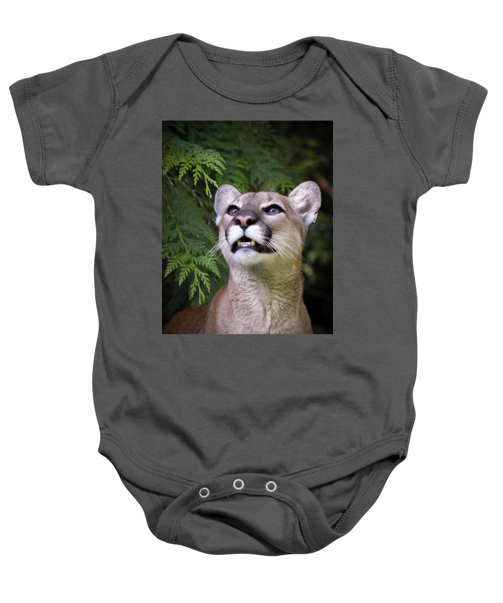 Cougar Baby Onesie featuring the photograph Looking Up by Steve McKinzie