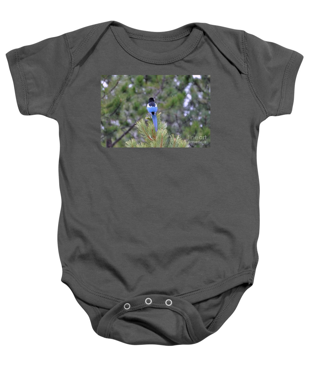 Birds Baby Onesie featuring the photograph Magpie In Snow by Dorrene BrownButterfield