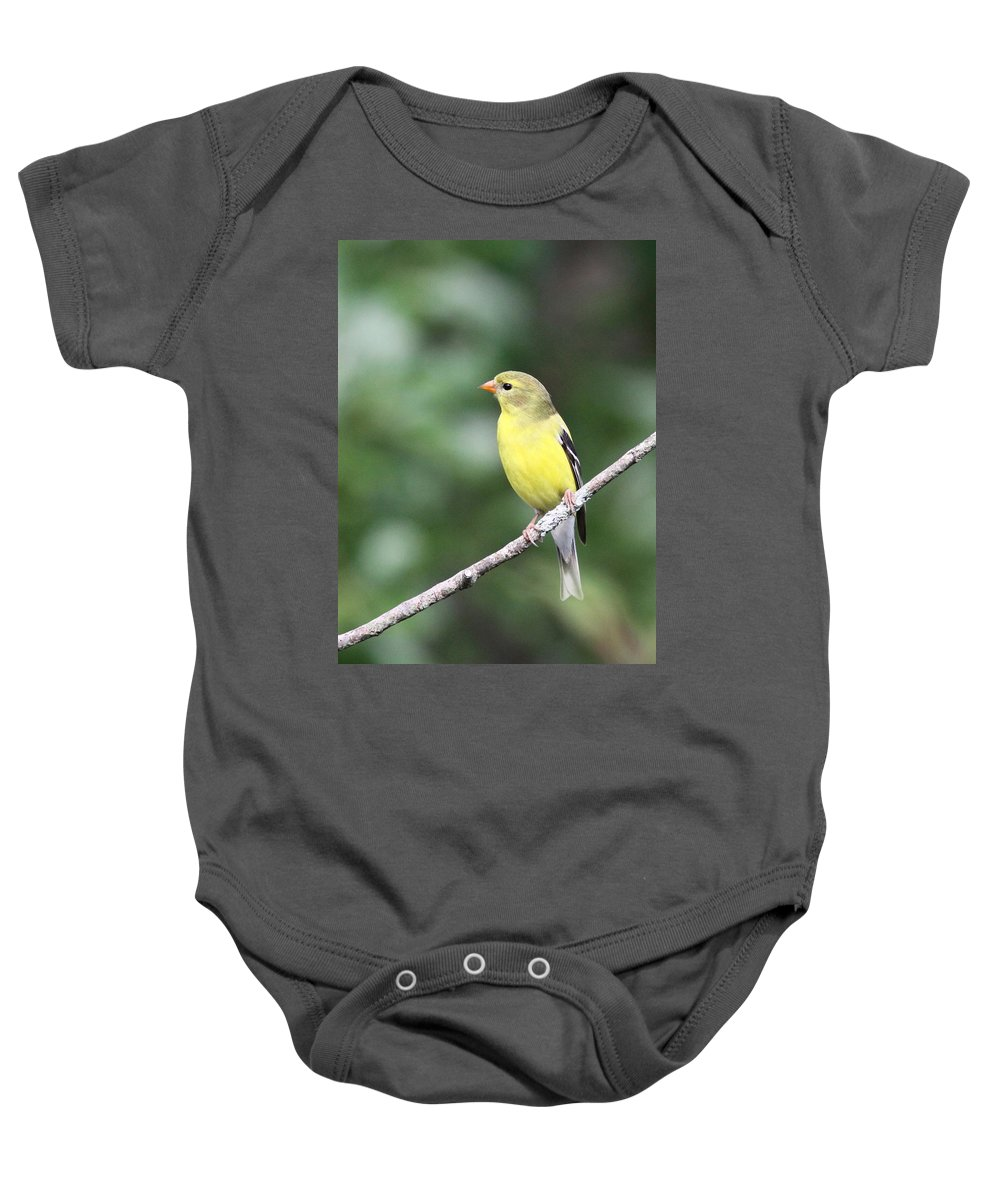 Goldfinch Baby Onesie featuring the photograph Mellow Lady by Travis Truelove