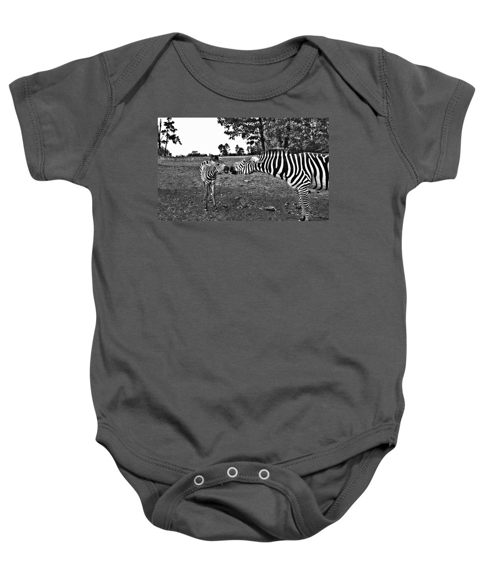Zebras Baby Onesie featuring the photograph Mother And Child-black And White by Douglas Barnard